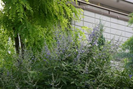 2011-07-08_28.jpg