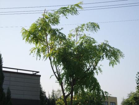 2011-07-16_03.jpg