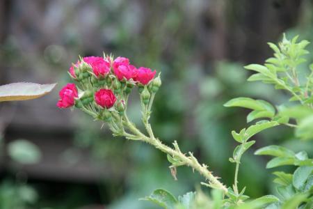 2011-08-01_22.jpg