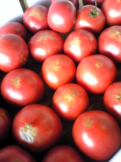 余市町の馬場農園さんちの「水切りトマト」