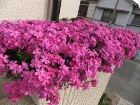 2011_05040009.jpg