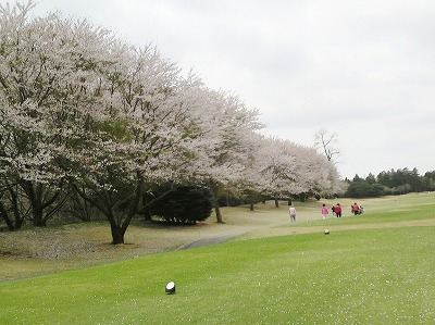 hanami20123 013