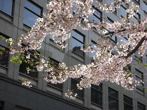 新宿の桜2