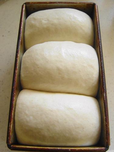 20090909ルバーブ酵母山食仕上げ発酵後