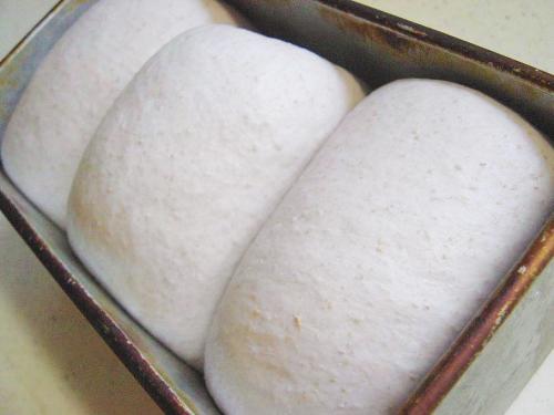 20091019ラズベリー酵母山食仕上げ発酵