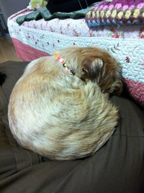 kokoro,まるくなって寝る