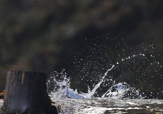 Diving2-002.jpg