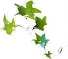 植物050