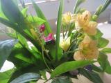 初夏 部屋を飾ったお花