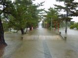 笹ヶ瀬川の増水は神社参道に流れ込む