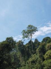 ブルネイジャングル3