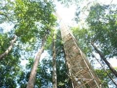 ブルネイジャングル15