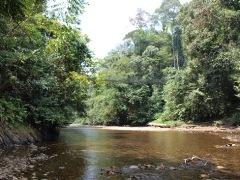 ブルネイジャングル14
