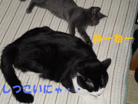 001_convert_20090901221952.jpg