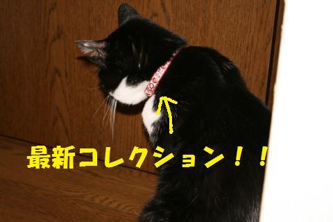 001_convert_20090916235822.jpg