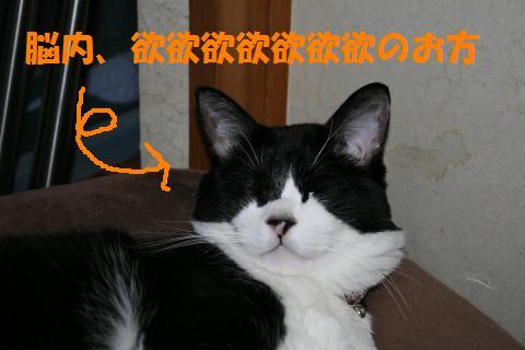 001_convert_20091002211543.jpg