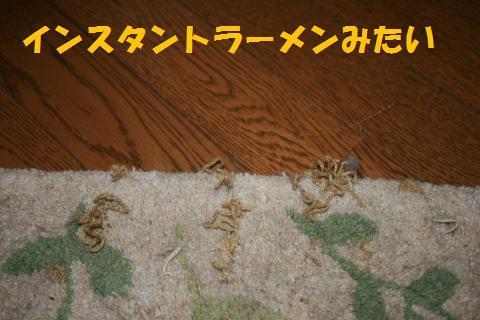 002_convert_20091005211735.jpg