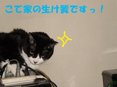 003_convert_20090816232834.jpg