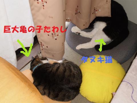 003_convert_20090825001111.jpg