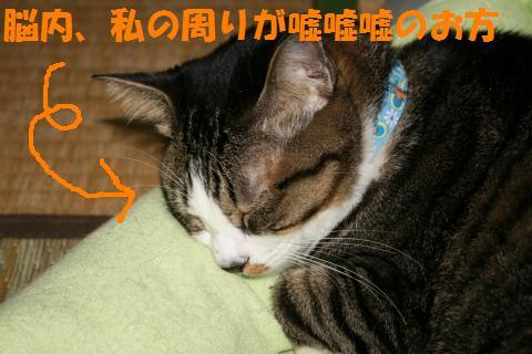 003_convert_20091002211729.jpg