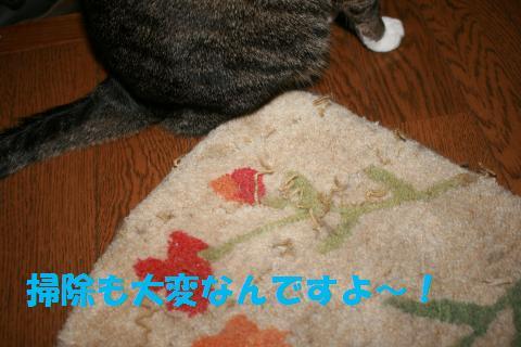 003_convert_20091005211910.jpg