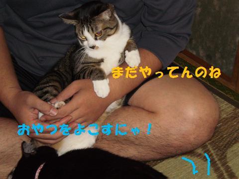 003_convert_20091101225432.jpg