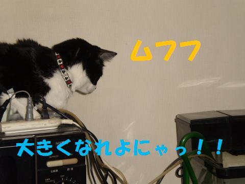 004_convert_20090816232949.jpg