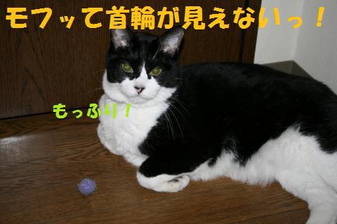 004_convert_20090916235958.jpg