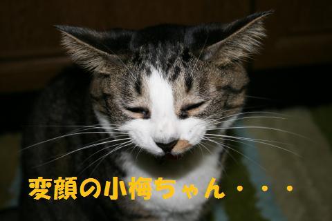 004_convert_20091009212107.jpg