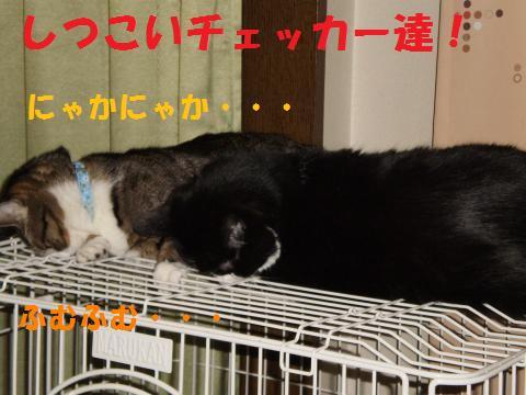 006_convert_20090825210824.jpg