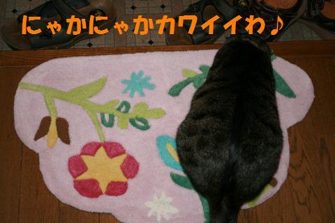 006_convert_20091005212228.jpg