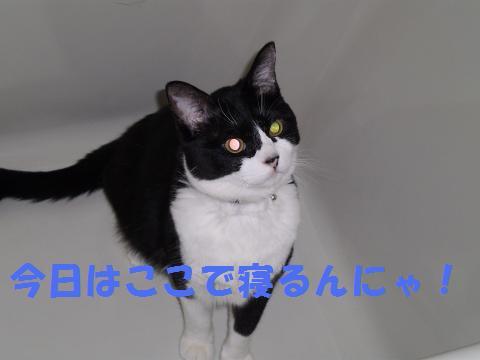007_convert_20090820221704.jpg