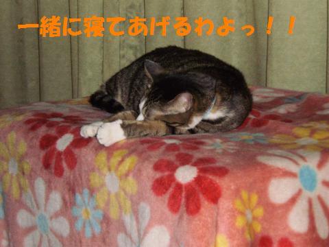 007_convert_20090903224201.jpg