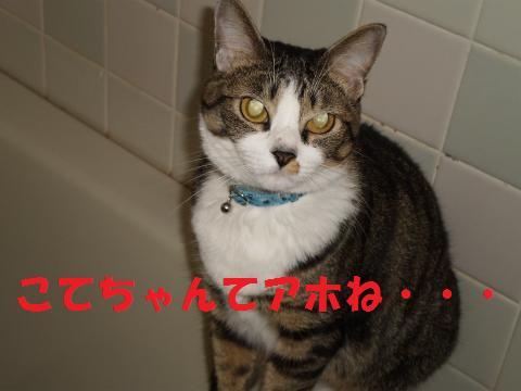 008_convert_20090820221803.jpg