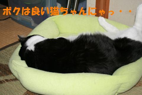 009_convert_20091005212358.jpg