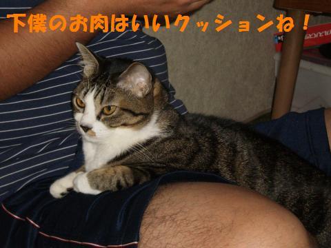 009_convert_20091012225123.jpg