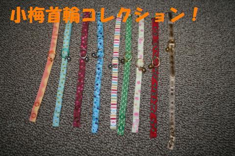 010_convert_20090917000456.jpg