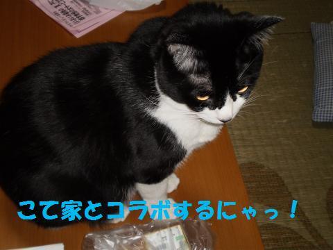 010_convert_20090930234922.jpg