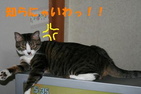 011_convert_20091008234247.jpg