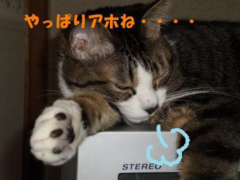 013_convert_20090930235022.jpg