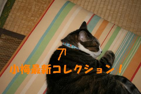 017_convert_20090917001014.jpg