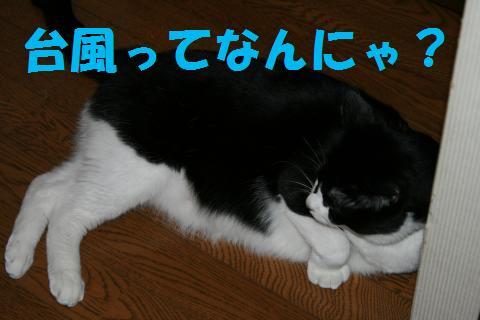 018_convert_20091008234541.jpg