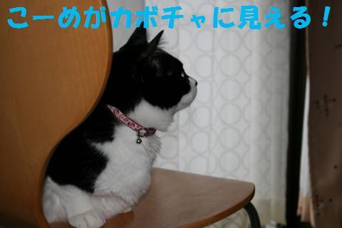 019_convert_20091031203012.jpg