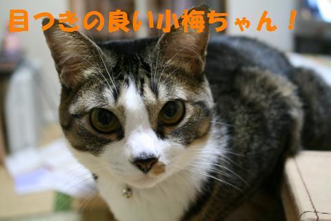 020_convert_20091014222509.jpg