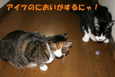 028_convert_20090908231306.jpg
