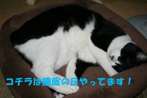 040_convert_20091012225255.jpg