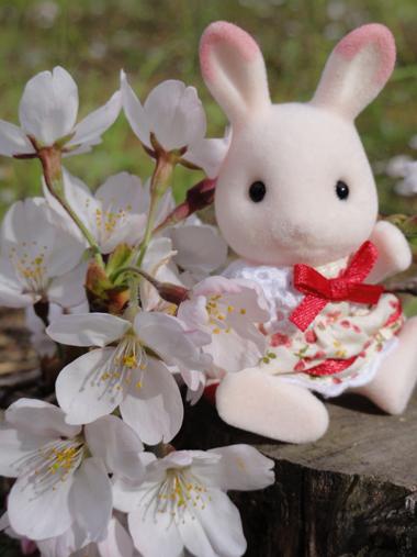 モモイロウサギさん2