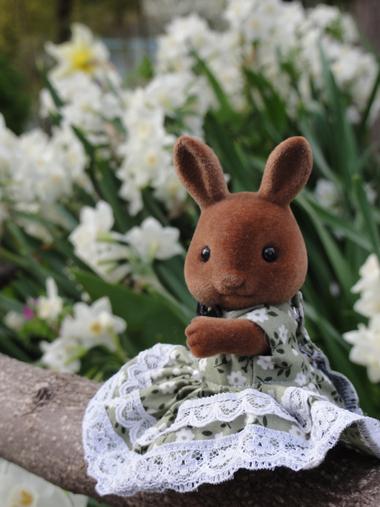 ブラウンウサギさん1