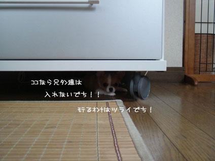 DSC06115.jpg