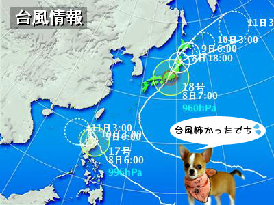 typha20091008.jpg